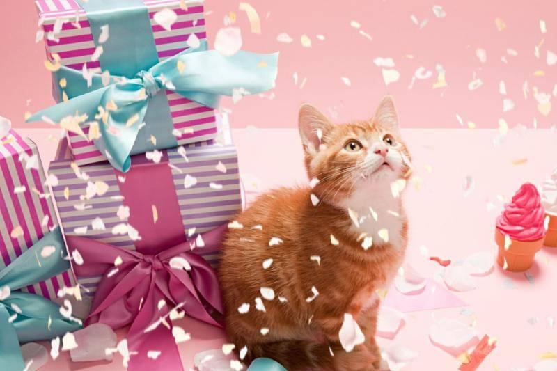 Всемирный день котов и кошек:всё о празднике