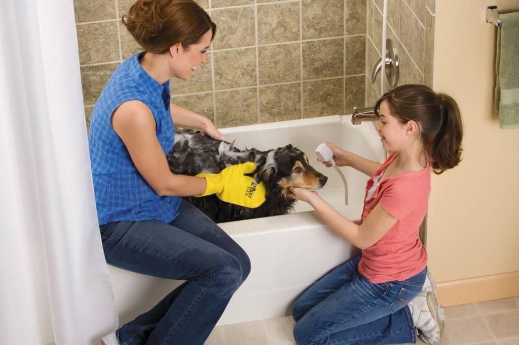 Можно ли мыть собаку человеческим шампунем, и каким лучше купать, детским или обычным