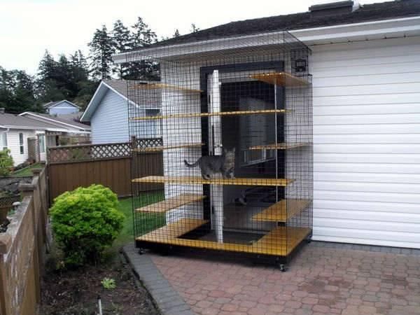 Созданы вольеры на окна для безопасной прогулки кошек