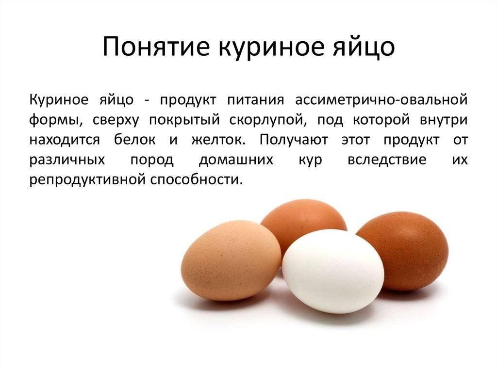 Можно ли собакам яйца. яйца в рационе собак.   здоровое питание