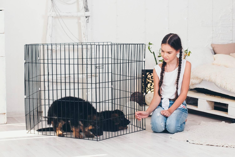 Клетки для собак: назначение, тонкости выбора, изготовления и установки