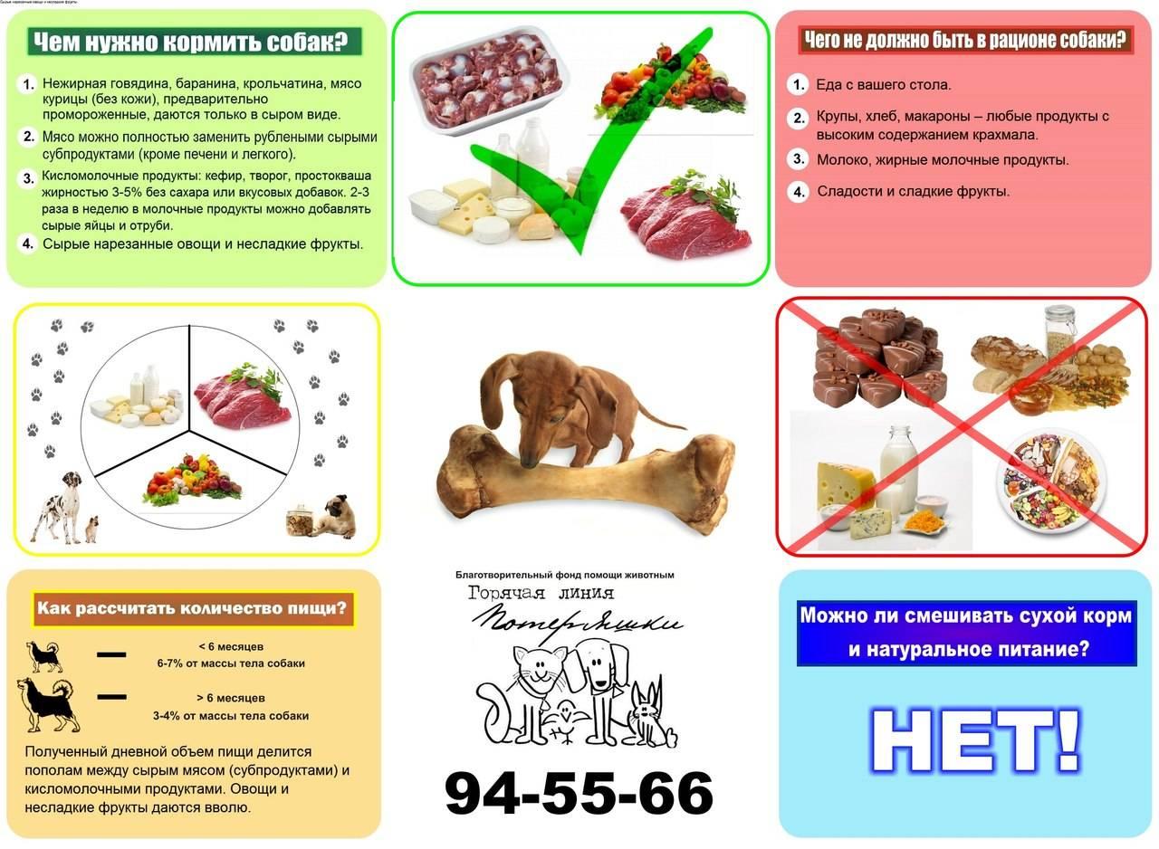 Чем кормить таксу и какие витамины выбрать при натуральном питании: советы по подбору и коррекции рациона