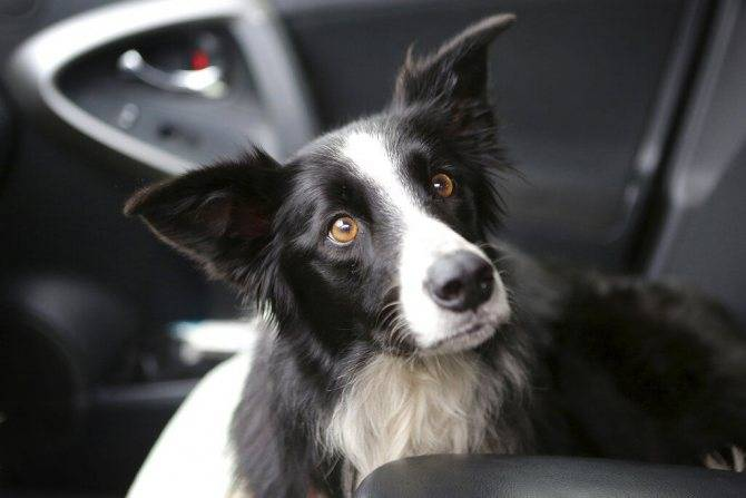 Сможет ли собака вернуться домой?