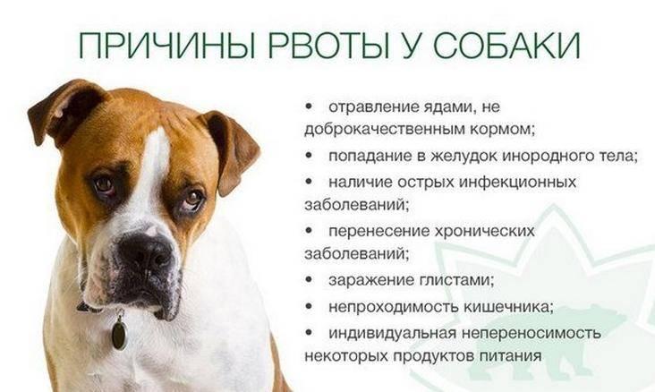 Собаку вырвало пеной — основные причины