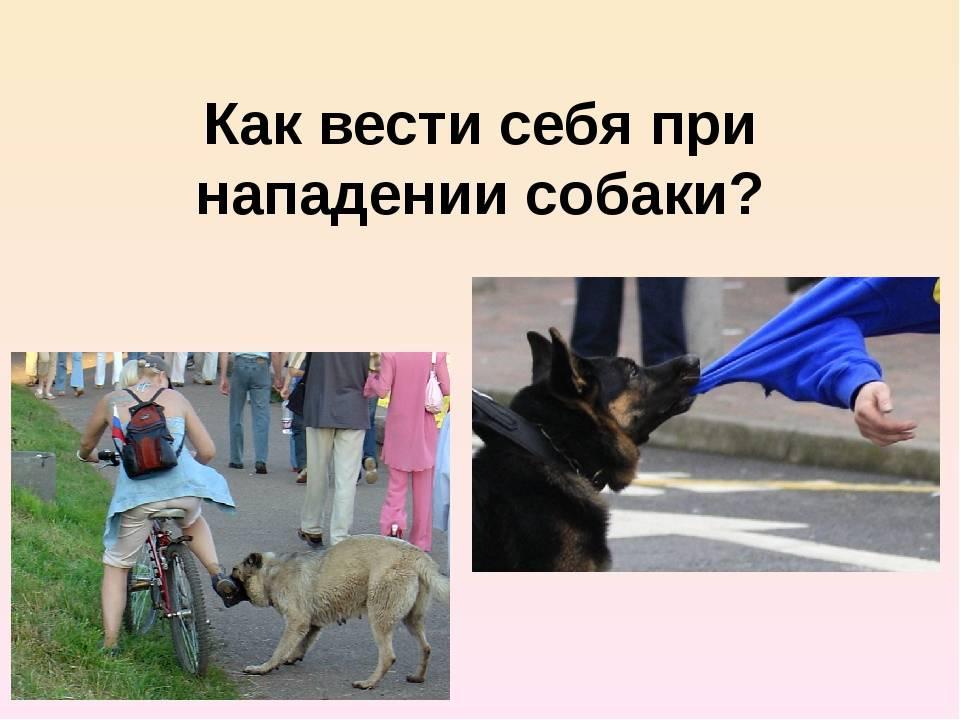 Как защититься от нападения собак / статьи         / newslab.ru