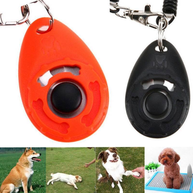 Кликер-дрессировка, или кликер-тренинг | дрессировка собак | ptichka.net - домашние питомцы
