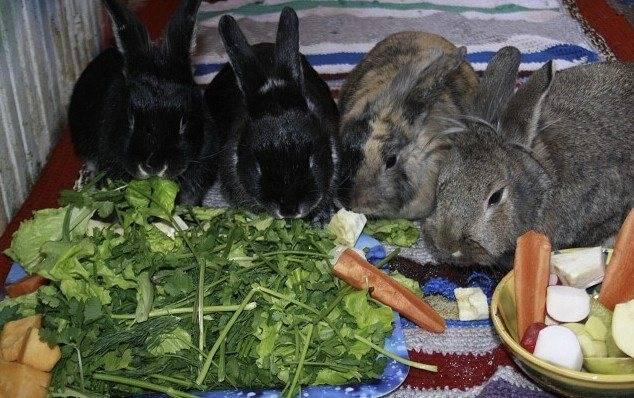 Можно ли кроликов кормить хлебом и сухарями, фото и видео
