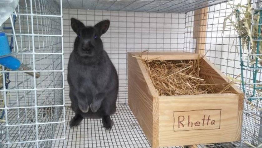Беременность у кроликов: сколько длится, основные признаки, как правильно ухаживать за крольчихой во время беременности