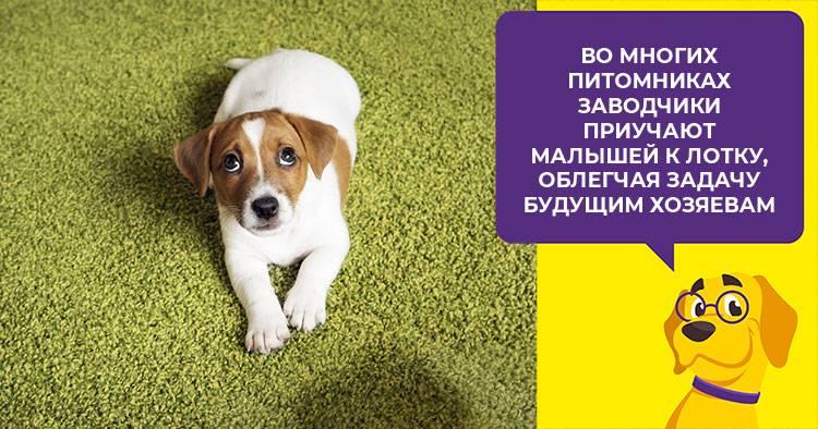 Советы опытного кинолога: что делать, если ваша собака громко воет, когда вы уходите из дому