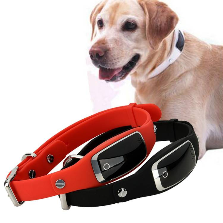 Ошейники для собак с навигатором: описание, характеристики, инструкции. ошейник с gps для собак для охоты