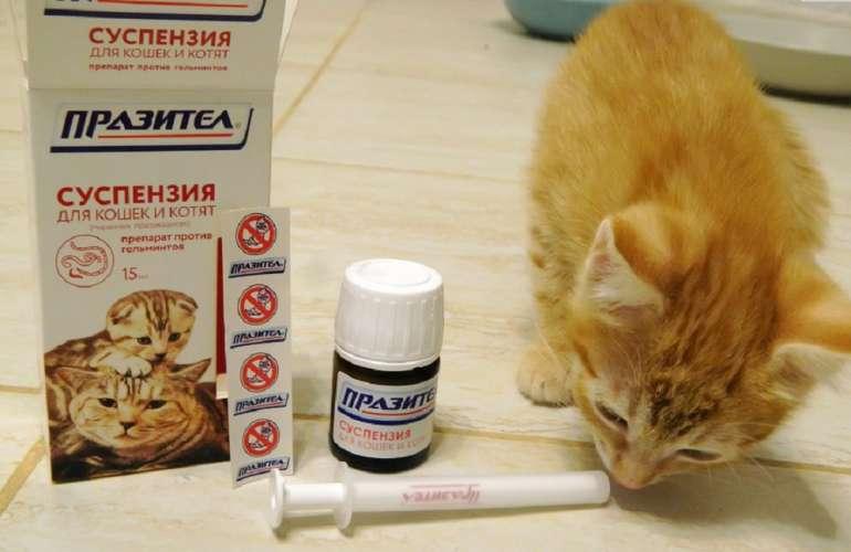 ?празител» суспензия для кошек и котят — инструкция по применению