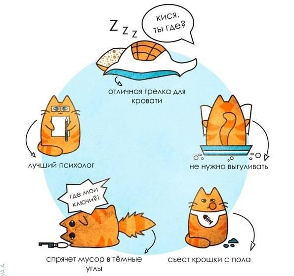 ᐉ как примирить двух кошек в одной квартире – кошки не могут ужиться вместе - zoomanji.ru