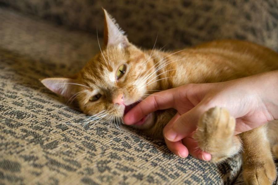 Как правильно отучить кота кусаться и царапаться: ? причины агрессии и что делать