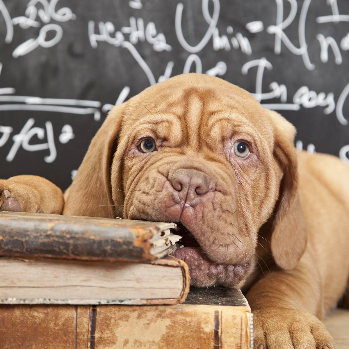Топ 10 самых умных собак в мире   на всякий случай