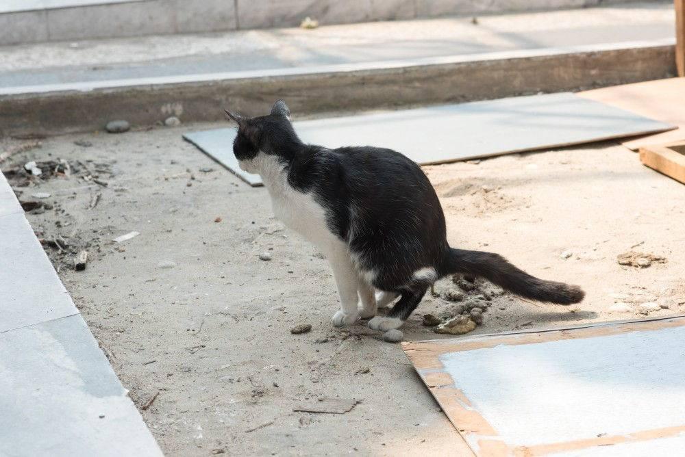 9 причин, почему кот какает с кровью: причины и лечение в домашних условиях, что делать