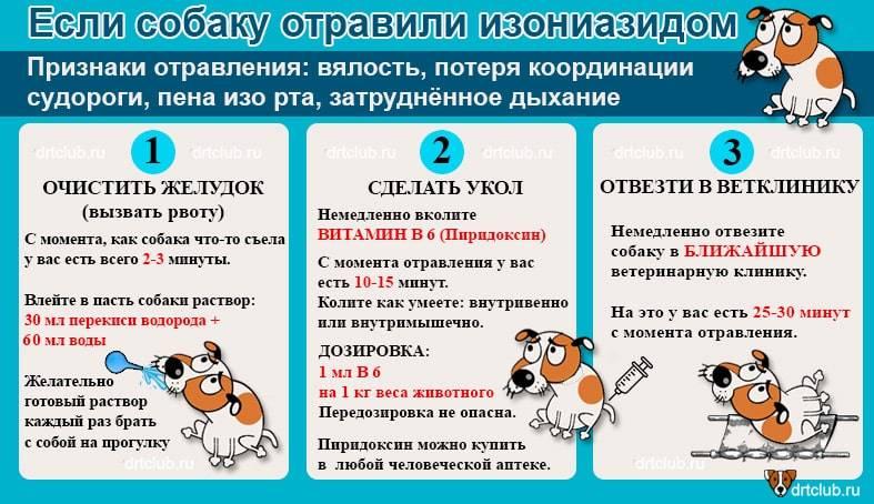 Что делать, если собака отравилась: симптомы, лечение в домашних условиях отравление.ру что делать, если собака отравилась: симптомы, лечение в домашних условиях
