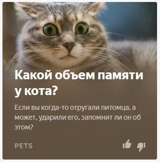 Какая память у кошек: долговременная, кратковременная, как развивать