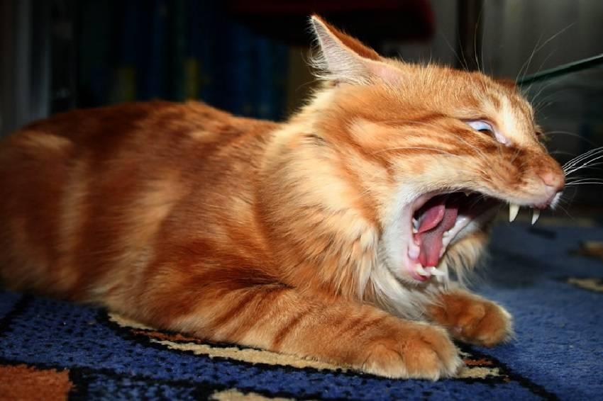 Как отучить кошку бегать по ночам: советы опытных владельцев