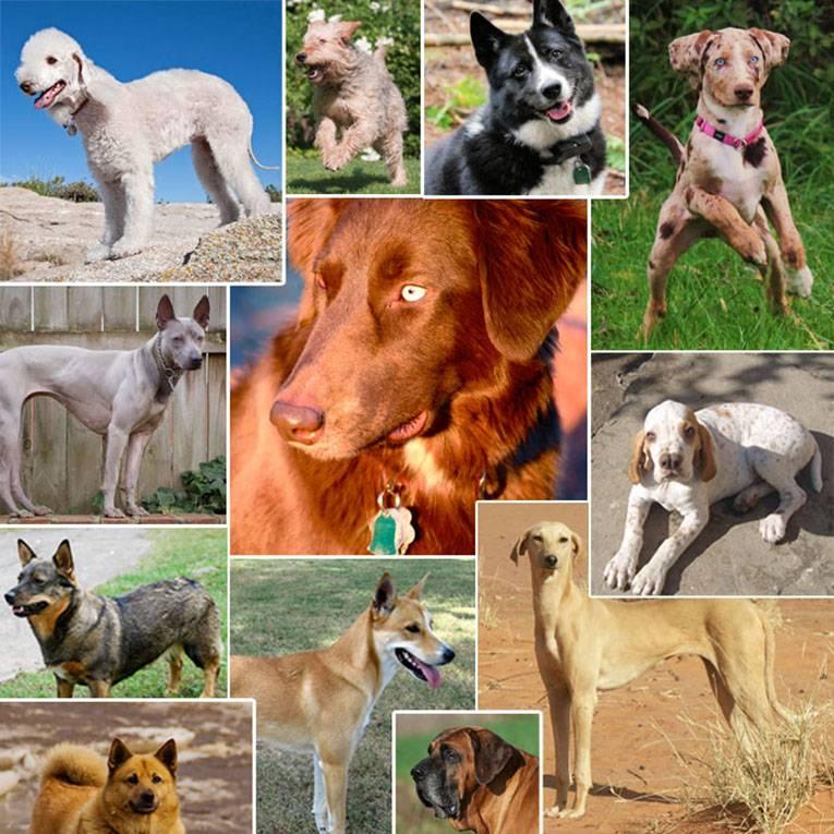 Новые породы собак