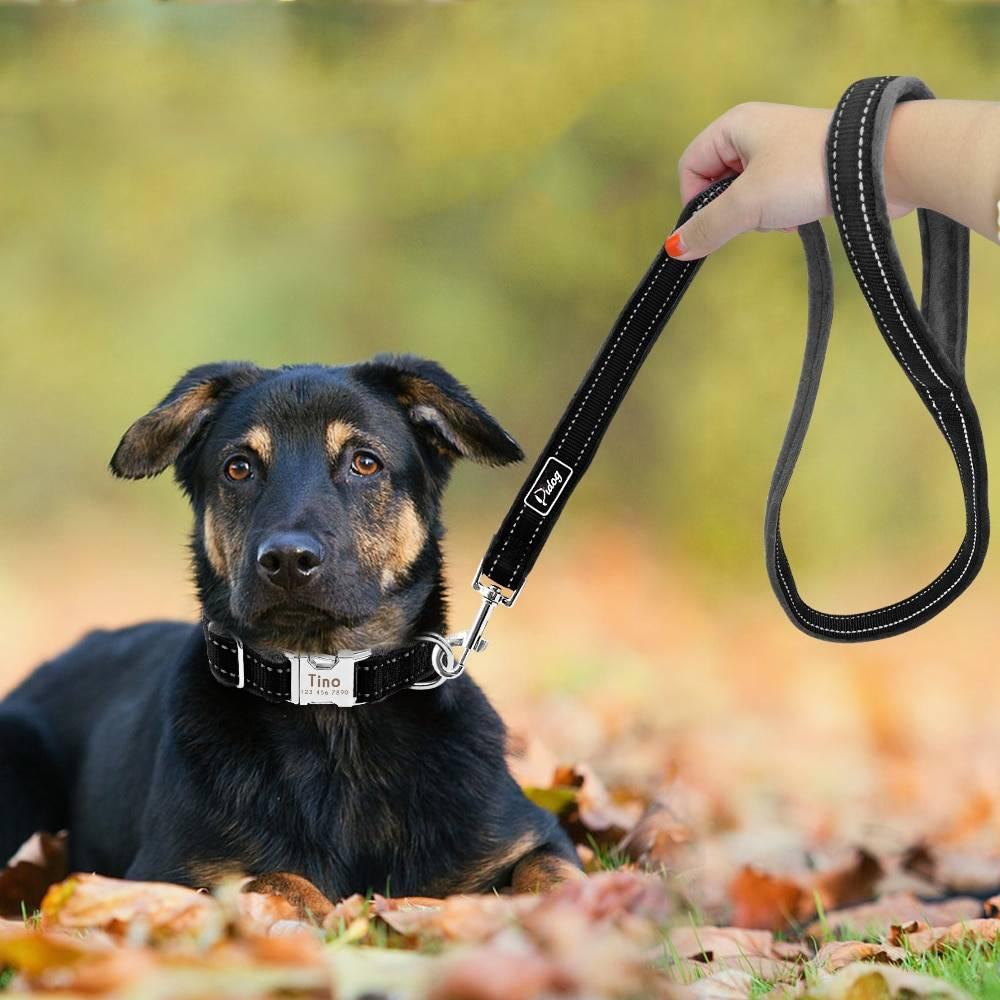 Как приучить взрослую собаку к поводку и ошейнику | dogkind.ru