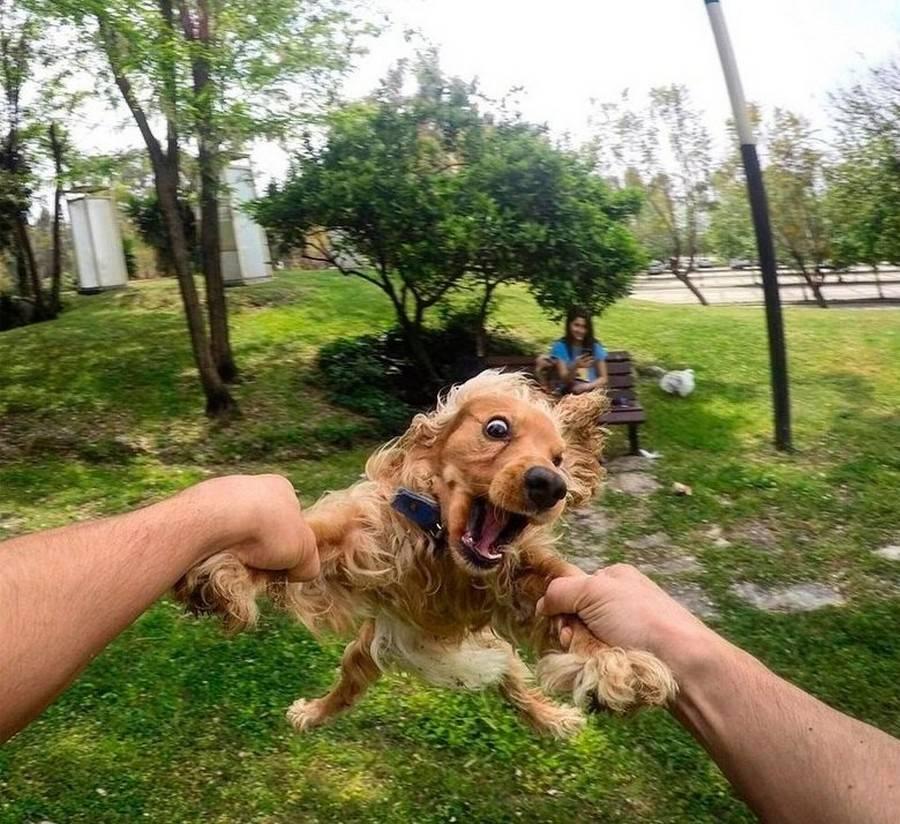 90 забавных и смешных фотографий животных, которые заставят вас улыбнуться (может помочь при хандре)