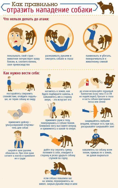 Как вести себя при встрече со стаей бездомных собак?