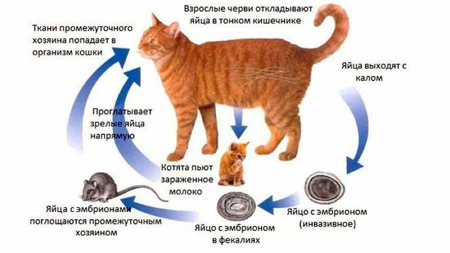 Понос у кошки и кота