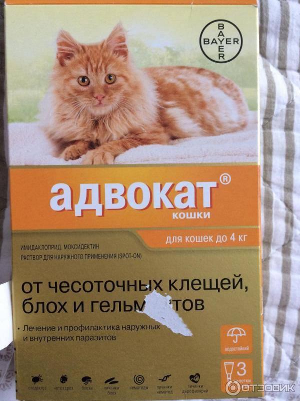 Инструкция по применению, отзывы и цена на капли на холку адвокат для кошек от блох, клещей и глистов.