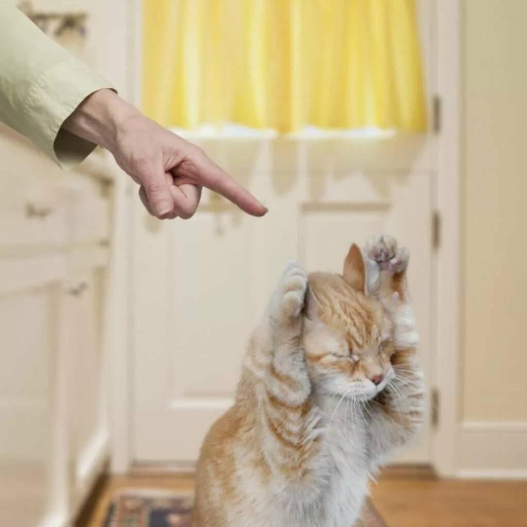 Если кошка дерет обои и мебель, как ее отучить от этой привычки