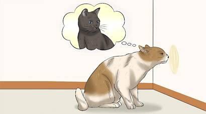 Почему даже кастрированные коты и кошки метят территорию в квартире, что делать, как их от этого отучить?