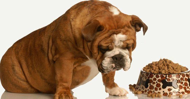 Вялость у собак. что делать?