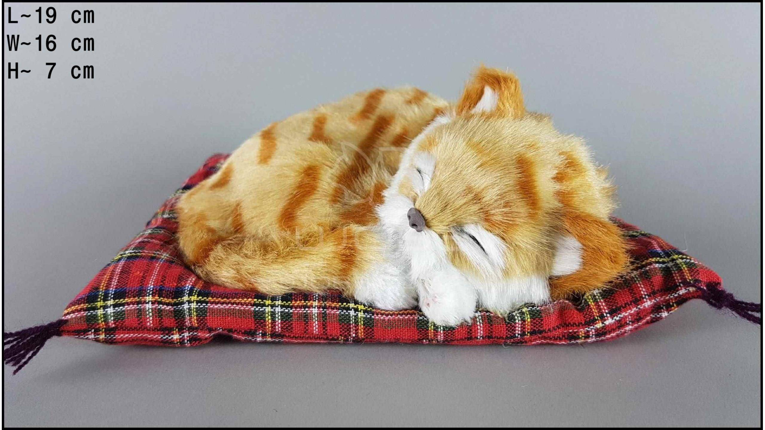 Почему кошки спят в ногах у хозяина, любят ложиться рядом с человеком, что это значит?