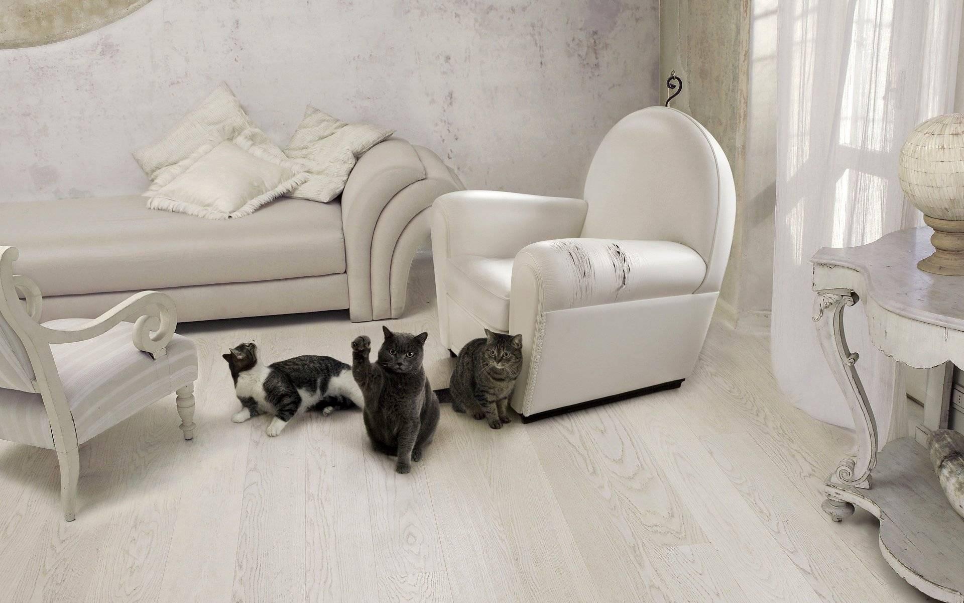 Как отучить кошку драть обои и мебель ?