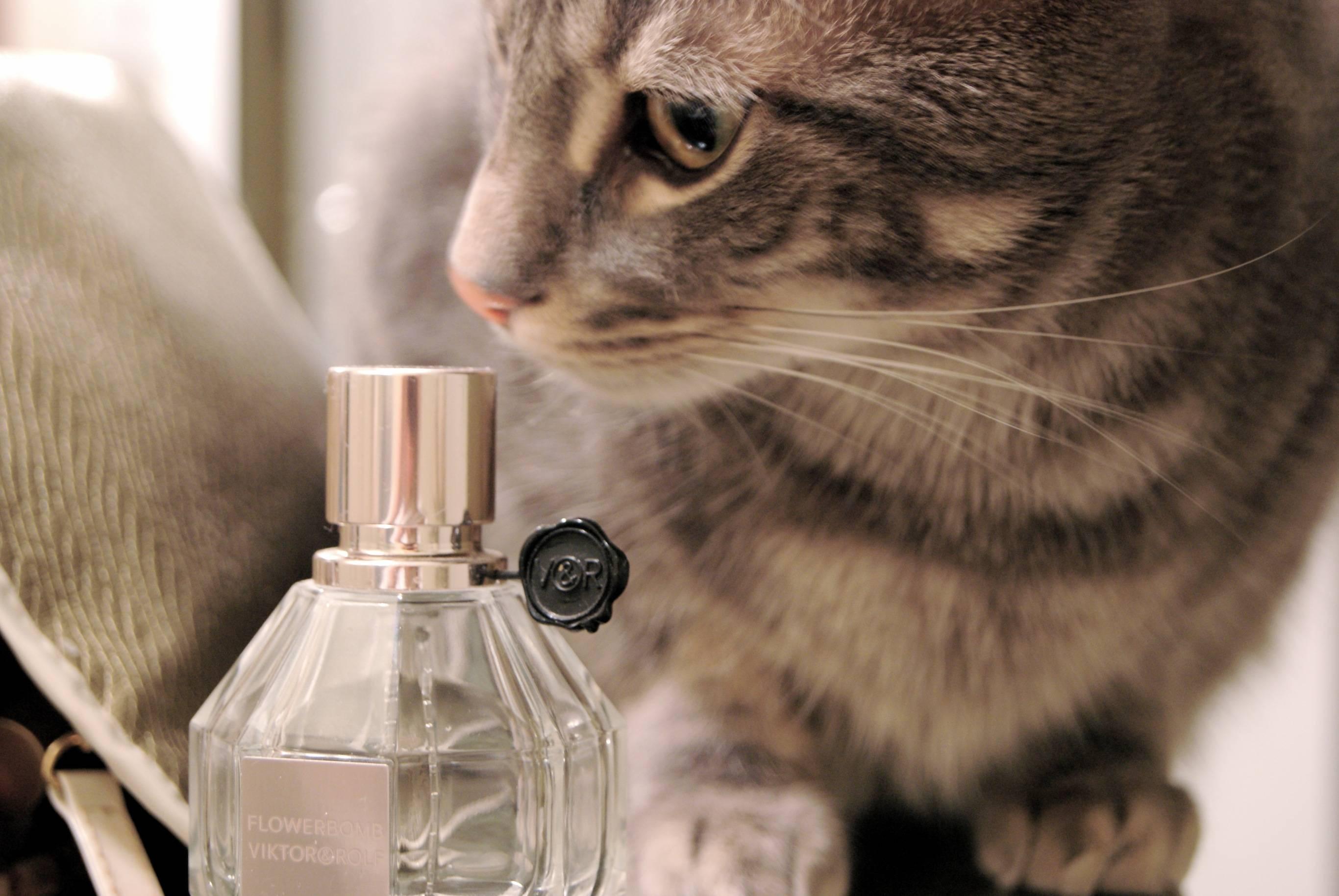 Почему воняет кот? причины и способы устранить проблему