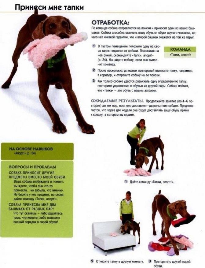 Как научить собаку команде «фас»