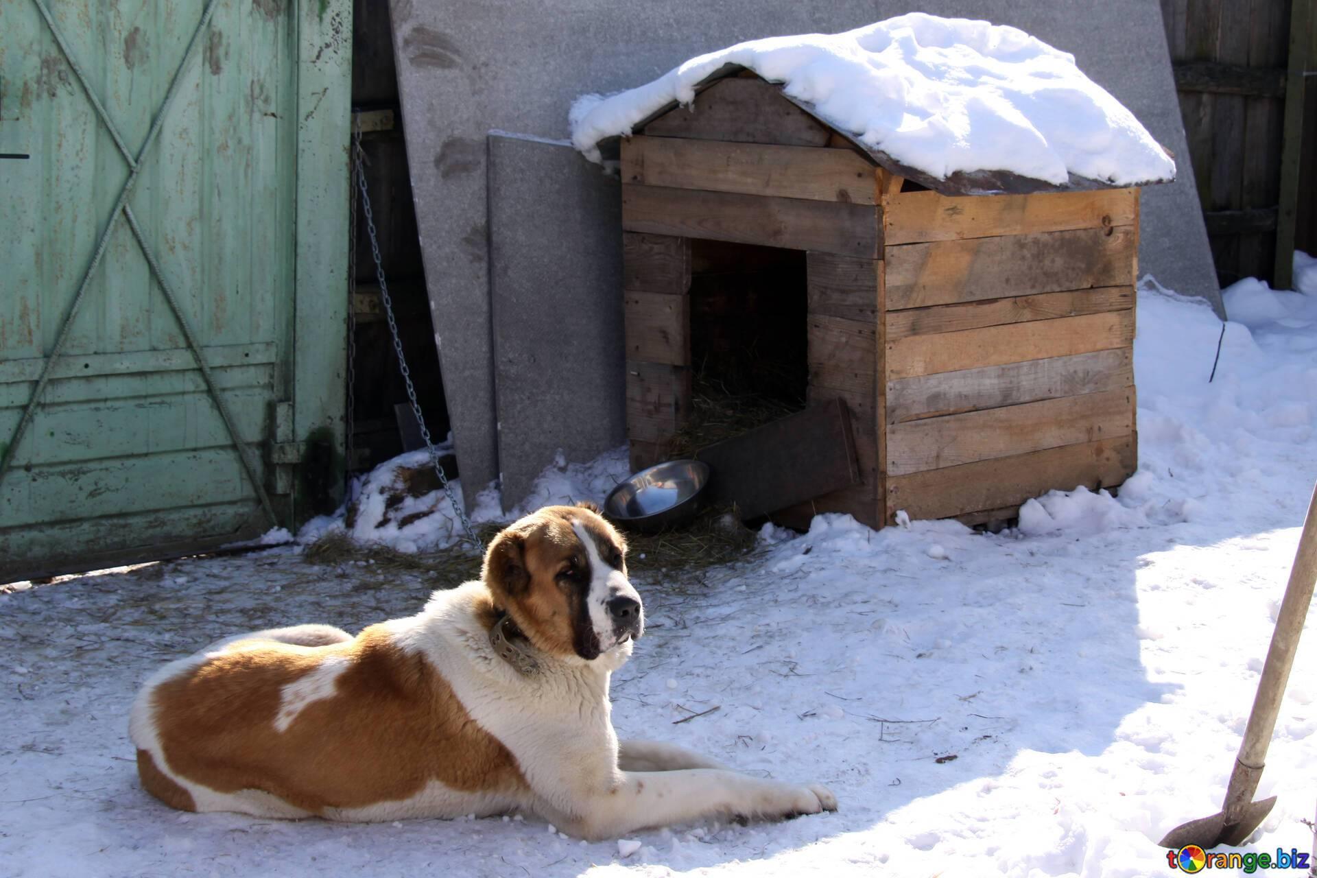 Строим сами вольер для собаки