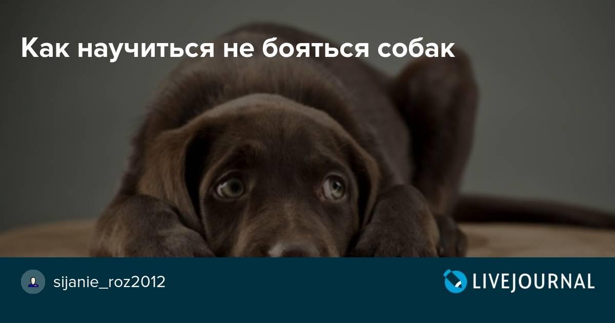 Собака боится громких звуков (выстрелов, грозы, салюта): что делать?