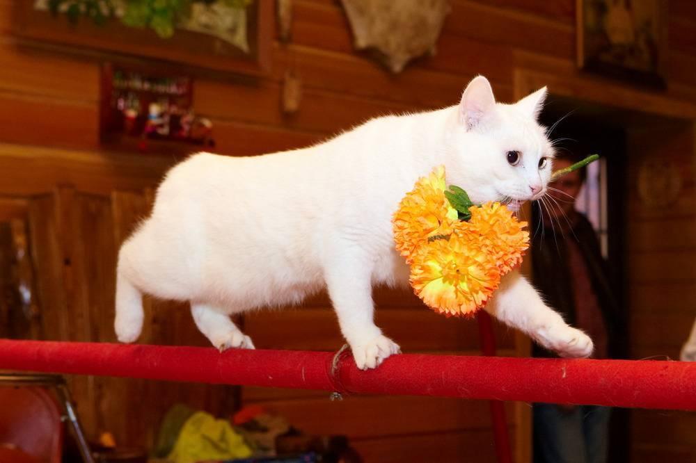Как дрессировать кошку?