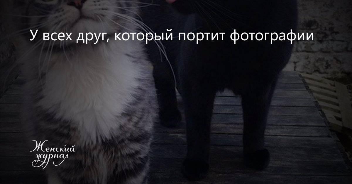 12 необычно больших животных, которые побили многие рекорды - gafki.ru