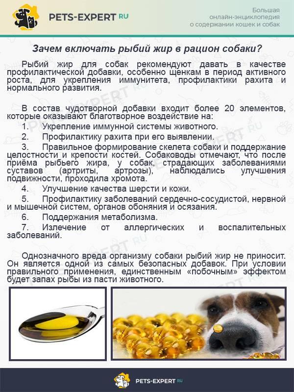 Разрешено ли давать собаке куриную голову и лапки: сколько нужно варить