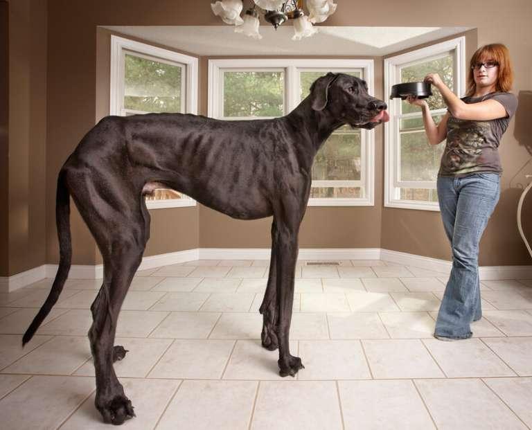 Честный рейтинг самых умных в мире пород собак с высоким интеллектом
