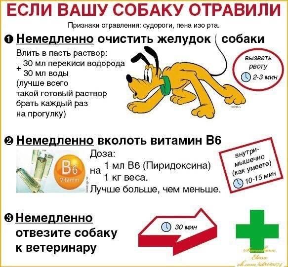 Пищевое отравление у собак: какими продуктами можно отравиться, признаки и симптомы, промывание желудка и первая помощь собаке