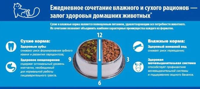 Вреден ли сухой корм для кошек