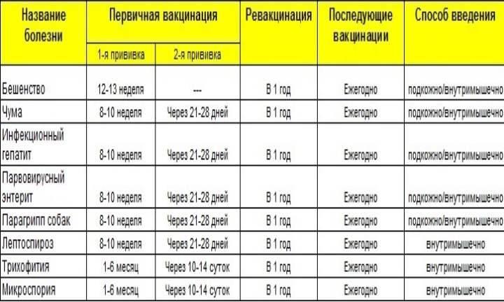 Вакцинация собак: график прививок, цена | бешенства, чумы, клещей, лишая, глистов