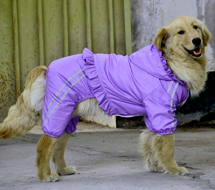Собаки средних размеров для квартиры (31 фото): названия и описание лучших спокойных домашних некрупных пород