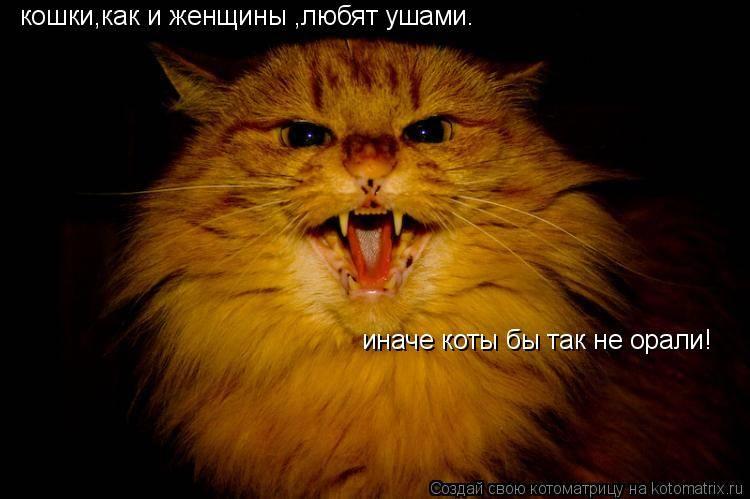 Чем кормить кошку, если она ничего не ест и постоянно отказывается кушать