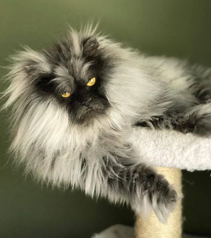 Самые красивые породы кошек - фото с названиями, описания пород