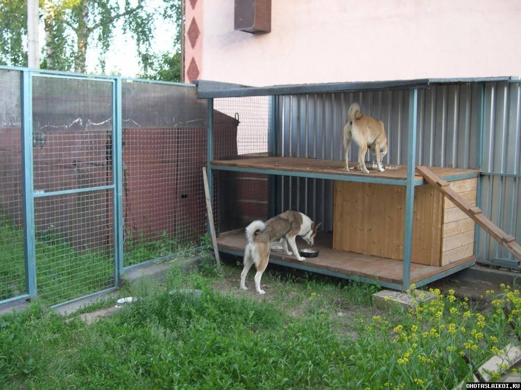 Вольер для собаки: фото, видео, чертежи, инструкции по изготовлению