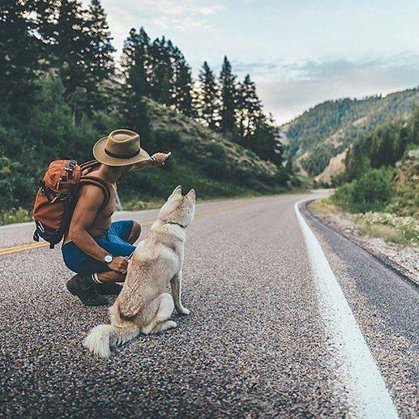 Лучшие породы собак для путешествий