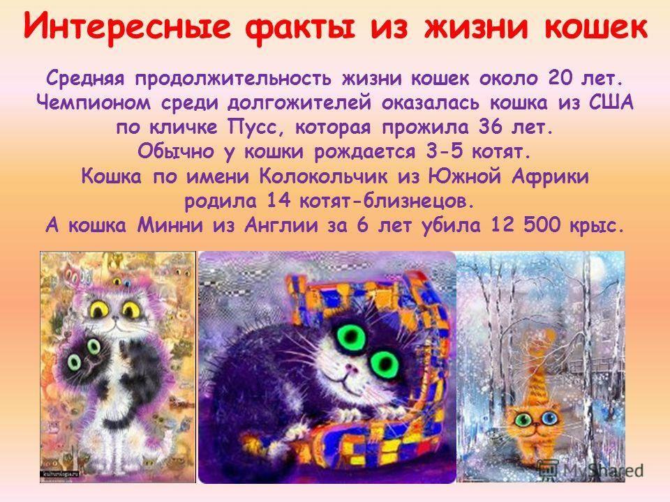 Всемирный день кошек и котов 2018 | какого числа, история, когда будет
